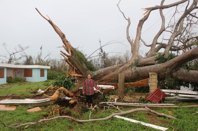 el_paso_del_huracan_tree_jonathan_emiliano_bujosa